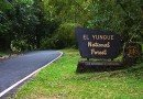 Ya se puede llegar al punto más alto del Yunque