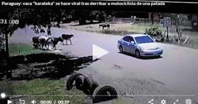 Vaca Karateka