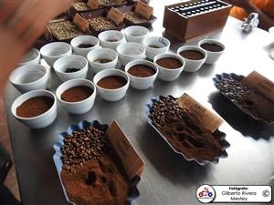6ta-fiesta-del-cafe-0011
